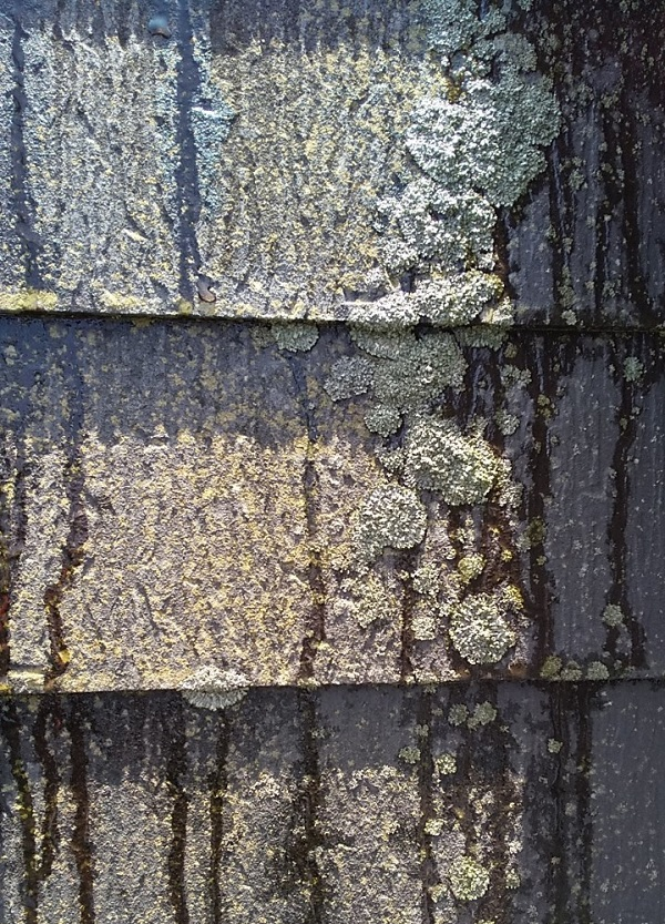 埼玉県久喜市 H様邸 屋根塗装・外壁塗装・付帯部塗装 高圧洗浄の目的とは 塗装しない場所も洗浄します! (2)